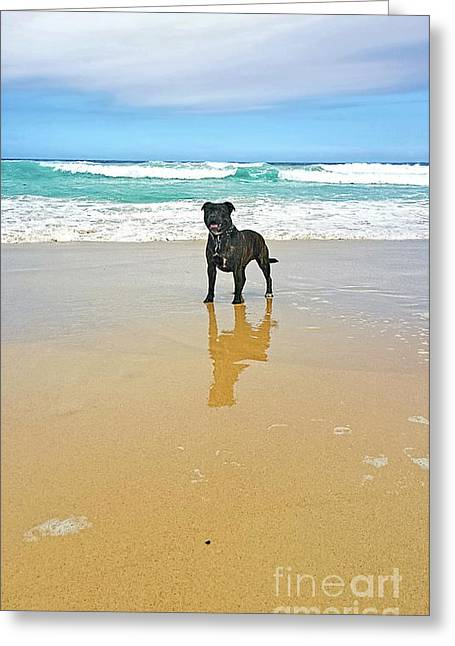 Beach Dog And Reflection By Kaye Menner Greeting Card