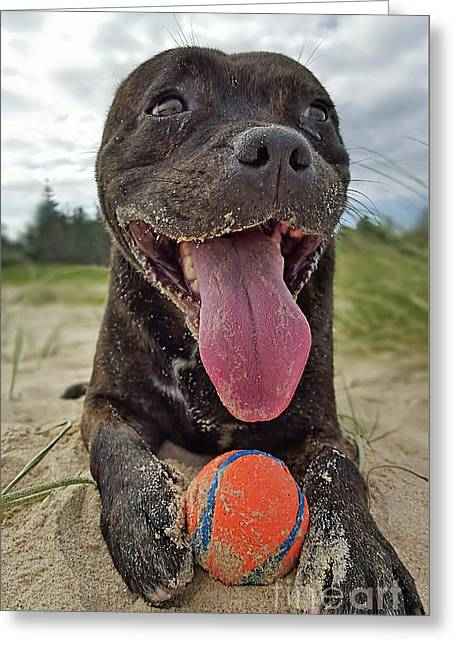 Greeting Card featuring the photograph Beach Dog - More Play? By Kaye Menner by Kaye Menner