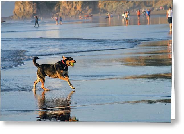 Beach Dog Playing Fetch Greeting Card by Bonnie Follett