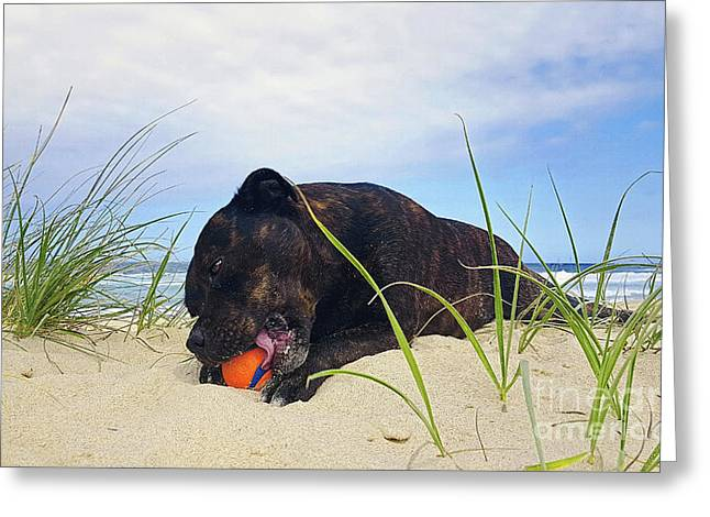 Beach Dog - Rest Time By Kaye Menner Greeting Card by Kaye Menner