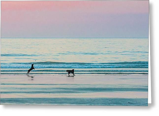 Beach Dogs Playing At Dawn Greeting Card
