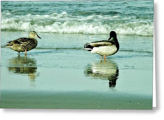 Beach Ducks Greeting Card