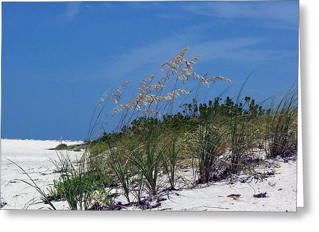 Beach Grass 3 Greeting Card by Evelyn Patrick