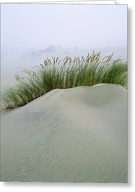 Beach Grass And Dunes Greeting Card