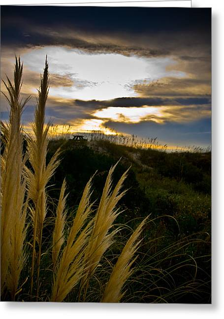 Beach Grass Greeting Card by Patrick  Flynn