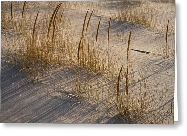 Beach Grasses Greeting Card