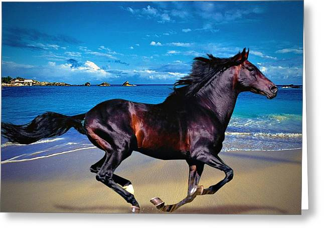 Beach Horse Greeting Card