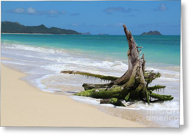 Beach In Hawaii Greeting Card by Anthony Jones