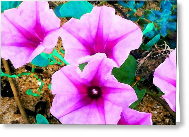 Beach Morning Glory Greeting Card by Stacey Chiew