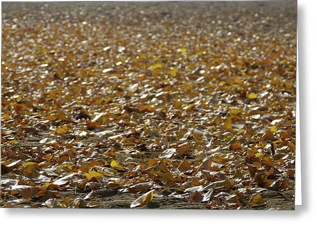 Beach Of Autumn Leaves Greeting Card