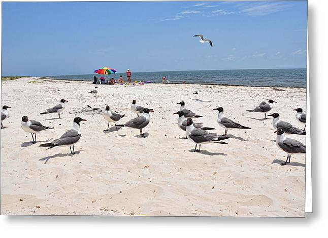 Greeting Card featuring the photograph Beach Party by Jan Amiss Photography