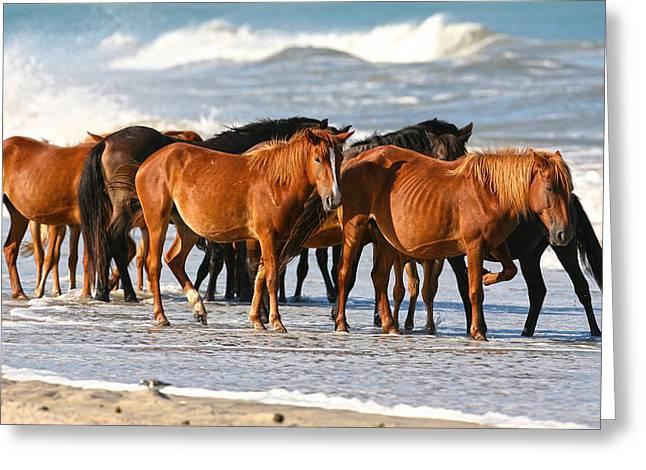 Beach Ponies Greeting Card