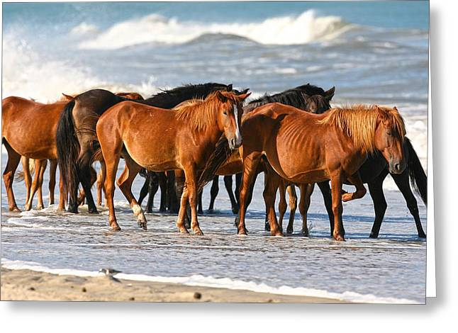 Beach Ponies Greeting Card by Robert Och