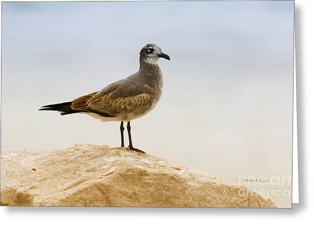 Greeting Card featuring the photograph Beach Pose by Deborah Benoit