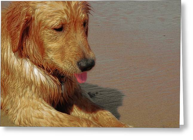 Beach Pup Greeting Card by JAMART Photography