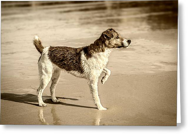 Greeting Card featuring the photograph Beach Ready by Nick Bywater
