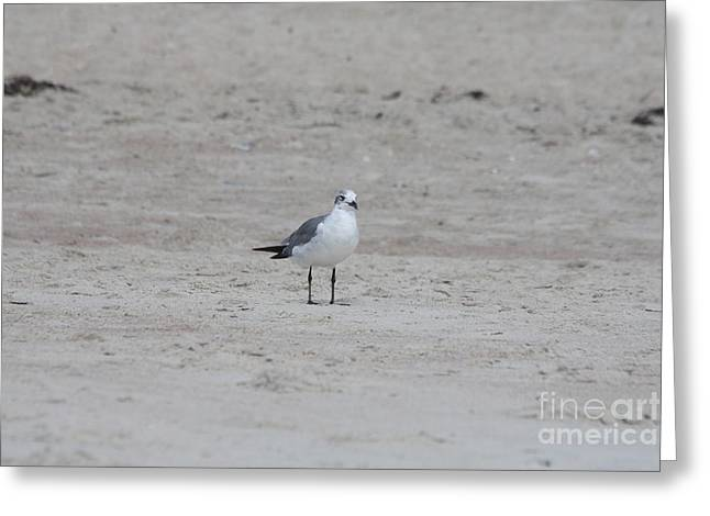 Beach Seagull Taking In The View Greeting Card