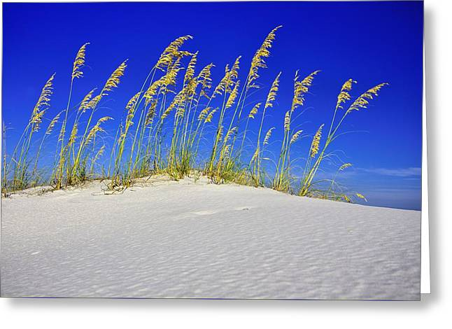 Beach Time Greeting Card by JC Findley