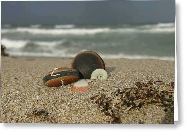 Beach Treasures 1 Greeting Card by Kimberly Mohlenhoff
