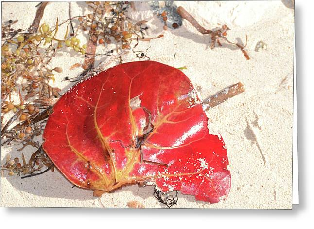 Beach Treasures 1 Greeting Card