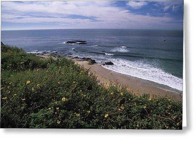 Beach Waves And Wildflowers Greeting Card by Don Kreuter