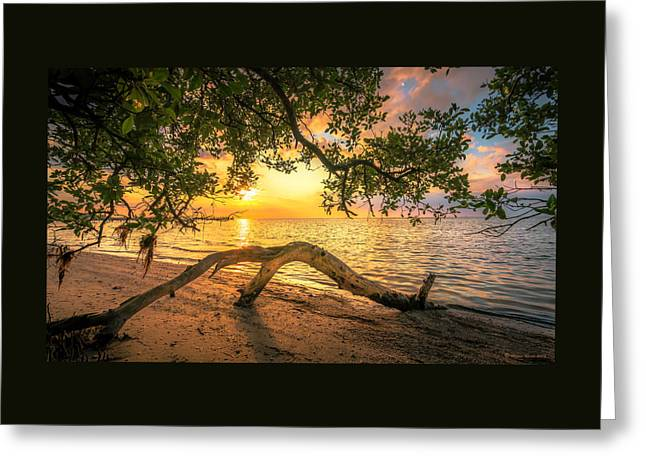 Beach Wood Greeting Card by Marvin Spates