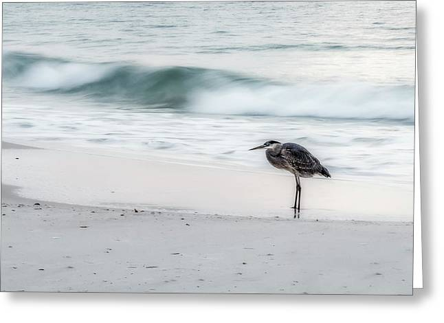 Beachbird Greeting Card