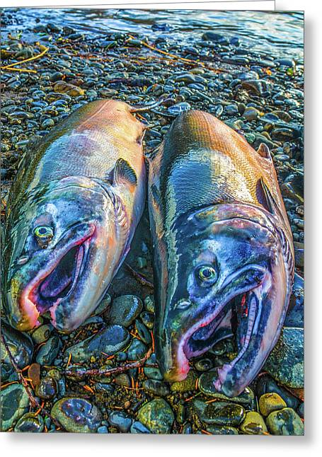 Beached Coho Greeting Card