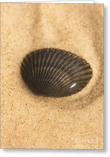 Beached Shell Greeting Card by Jorgo Photography - Wall Art Gallery