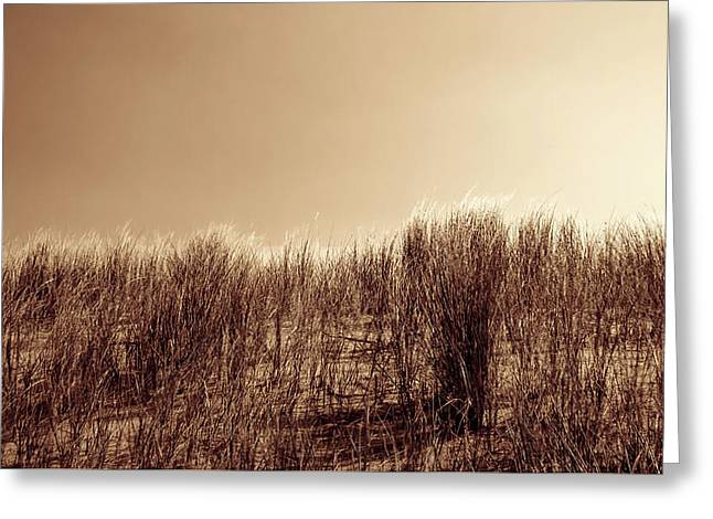 Beachgrass In Sepia Greeting Card