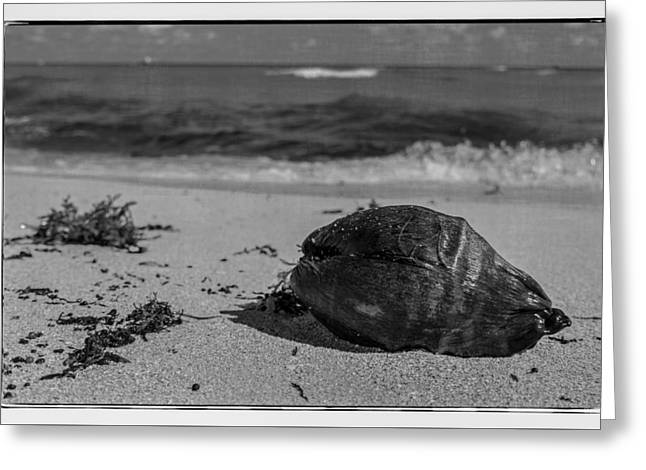 Greeting Card featuring the photograph Beachside by Melinda Ledsome