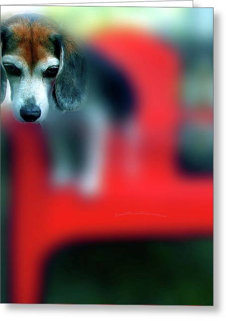 Beagle Beba Portrait Greeting Card