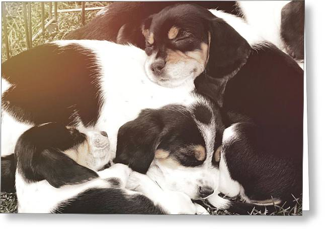 Beagle Pile Greeting Card by JAMART Photography