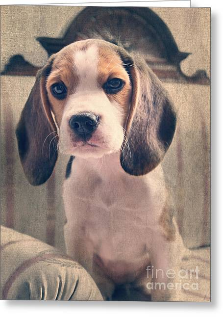 Beagle Puppy Luna Greeting Card by Angela Doelling AD DESIGN Photo and PhotoArt