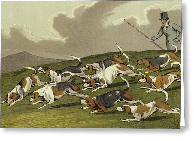 Beagles Greeting Card by Henry Thomas Alken