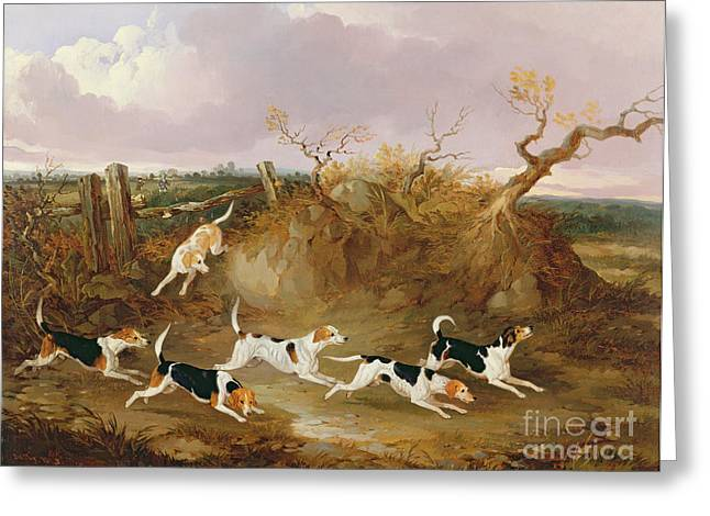 Beagles In Full Cry Greeting Card by John Dalby
