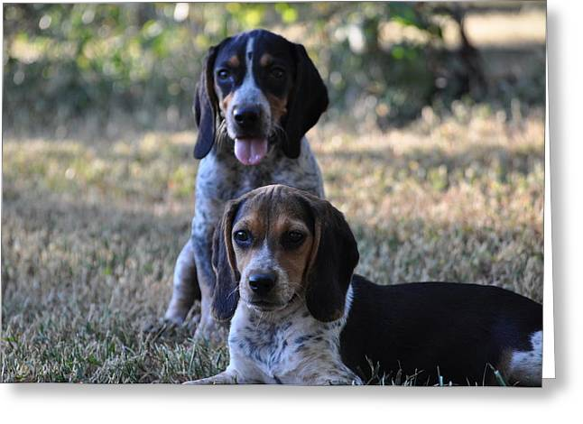 Beagles Greeting Card by Tammy Price