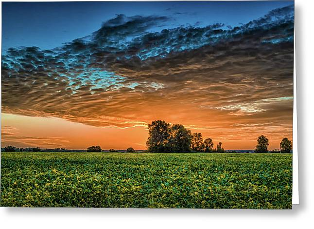 Beanfield Greeting Card by James Barber