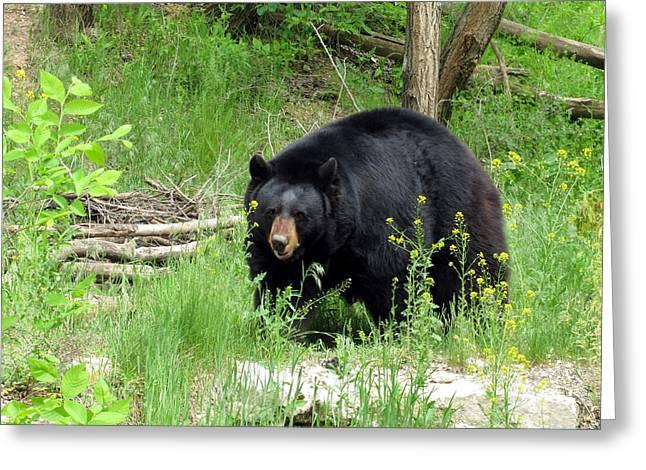 Bear 2 Greeting Card by George Jones