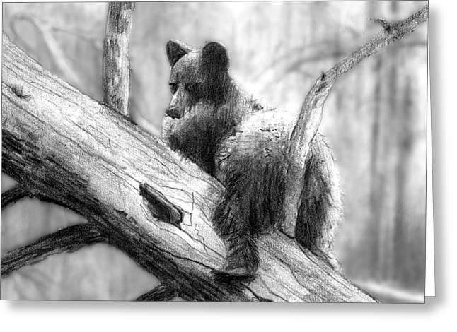 Bear Bottom Greeting Card by Paul Sachtleben