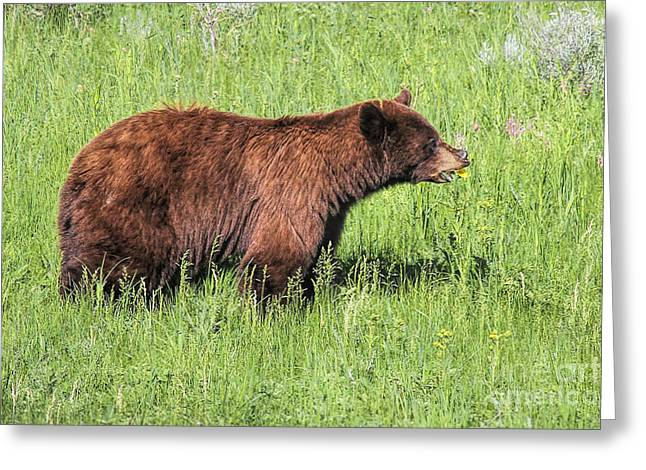 Bear Eating Daisies Greeting Card