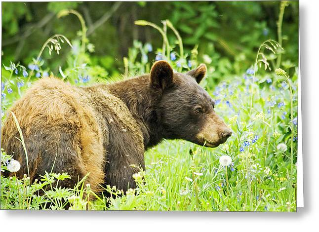 Bear In Flowers Greeting Card