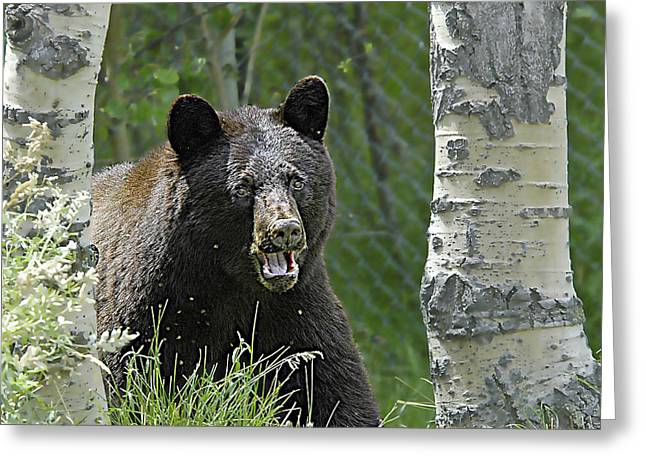 Bear In Yard Greeting Card