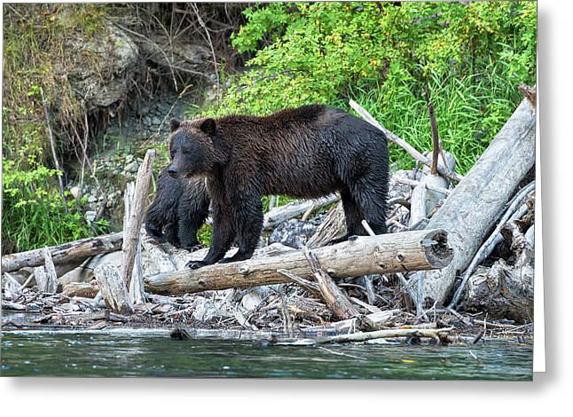 In The Great Bear Rainforest Greeting Card
