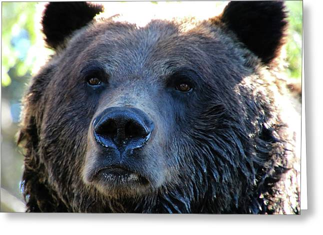 Bear On Grouse Greeting Card