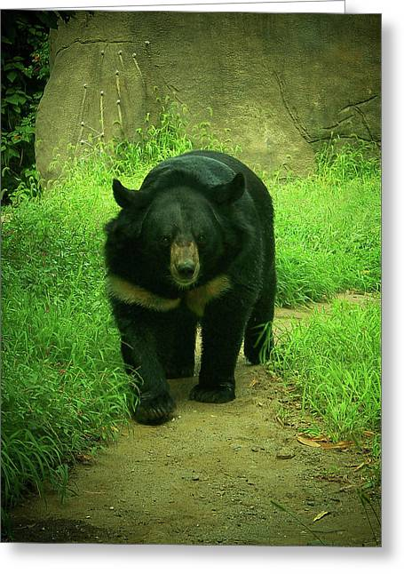 Bear On The Prowl Greeting Card by Trish Tritz