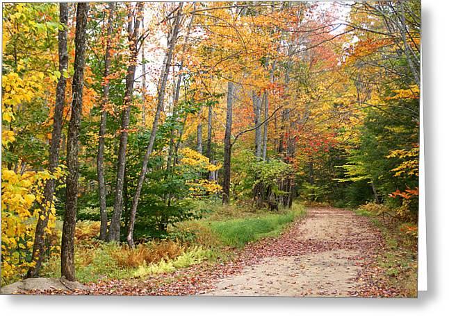 Rural Maine Roads Greeting Cards - Bear Road in Autumn Greeting Card by Lynda Lehmann
