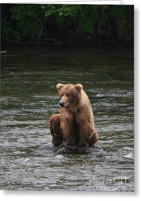 Bear Sitting On Water Greeting Card by Tracey Hunnewell