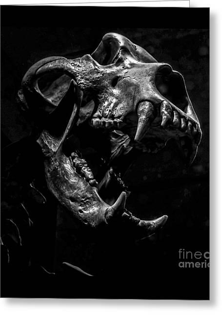 Bear Skull Square Greeting Card by James Aiken