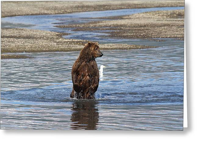 Bear Standing In River Greeting Card
